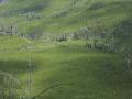 vastness-and-regrowth-in-old-burn-glacier-national-park