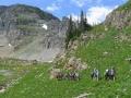 llama-trekking