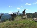 montana-llama-treks